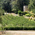 Tussen de wijnranken